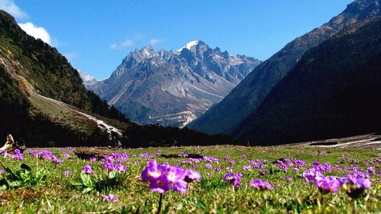 yumthang valley tours